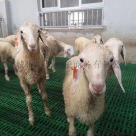 盖羊舍用塑料羊床铺板羊粪隔离板羊圈地板