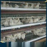 吉安罗曼灰青年鸡,吉安罗曼灰青年鸡养殖技术