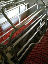 欧式母猪产床 定位栏 保育床 养猪设备
