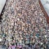 河南鹅卵石 水处理垫层滤料报价 天然鹅卵石