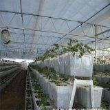 金坤陽光板溫室 陽光板溫室設計 陽光板大棚建造