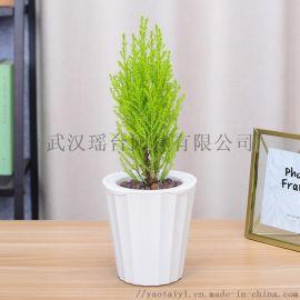 武汉园林四季常青苗木