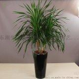 武汉公司绿植服务单位花卉室外园林