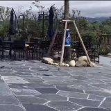 厂家生产 碎拼青石板 不规则乱石条 碎拼石材铺路砖