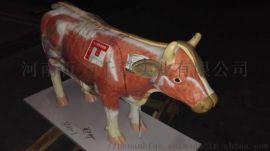 牛解剖模型动物解剖模型*系统解剖模型