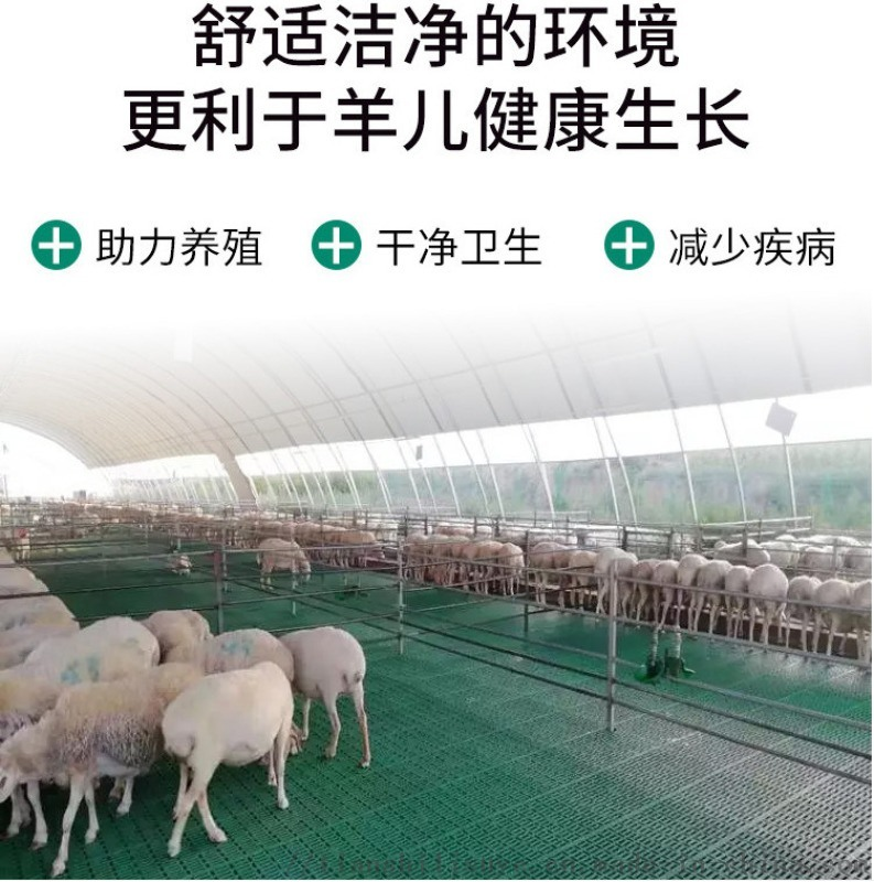 1米养羊  漏粪板羊舍塑料羊床羊用漏粪床