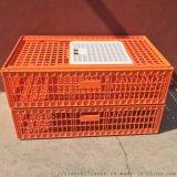 天仕利塑料成鸡运输笼塑料鸡笼子鸡鸭周转箱厂家