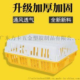鸡笼 鸡筐 塑料鸡笼子 鸭筐 运输鸡笼 鸡笼子