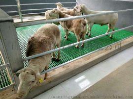 漏粪板 漏粪羊床 全舍饲高床塑料漏粪地板