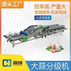新款 大蒜分级机 水果分选机 果蔬加工设备 生产厂家 现货