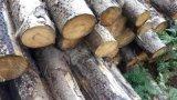 雲杉原木, 進口雲杉原木, 雲杉價格, 雲杉廠家