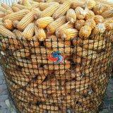塑料養殖網廠家 糧食儲藏塑料網 圈苞米網