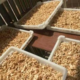 厂家生产直销速冻盘盘 单冻盘 肉串晾晒盘