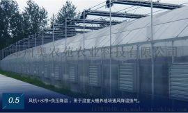 河南文洛型PC板温室大棚建造