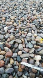 永顺直销鹅卵石  天然黑鹅卵石 景观 园林用卵石