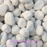 本格供应汉白玉鹅卵石 白色石子 景观白色砾石鹅卵石