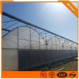 连栋薄膜蔬菜大棚 保温棚 果树种植简易农业大棚建设