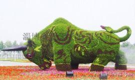 淄博奥景园艺公司承接各类道路绿化工程