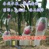 批发各种规格尼龙网眼袋 果蔬防虫套袋 种子网眼袋 火龙果防虫袋