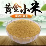 廠家直銷優質小米  有機小米 非轉基因小米 富硒小米