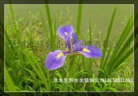 深圳那裏有水生植物苗場