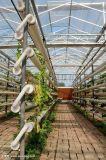 建造無土栽培蔬菜玻璃溫室的廠家
