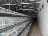兵海笼具销售三层四门电镀锌蛋鸡笼