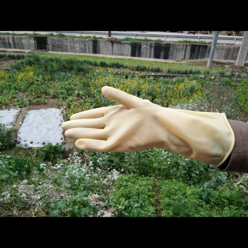 牛筋手套/乳胶手套