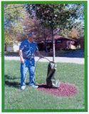 树木供水用20加仑滴水袋