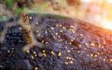 有机肥料检测 有机肥分析鉴定 标准NY 525检测