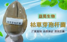 芽孢杆菌除青苔用 水产养殖净水芽孢杆菌