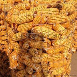 厂家供应热镀锌电焊网养殖圈玉米圈地网防护隔离铁丝围栏网养殖网