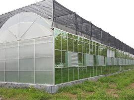 连栋圆拱形双拱双膜温室青州泉瑞温室建造