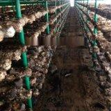 香菇菌棒架 养菌架 立体种植架香菇架