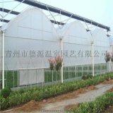 薄膜連棟溫室承建-養殖連棟溫室大棚-德源溫室