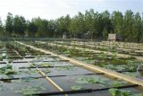 环保鱼塘藕池防渗养殖膜