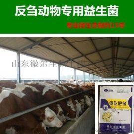 牛羊增重的好方法,养殖户们的不二之选