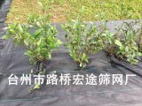 供應蔬菜大棚防草園藝地布,塑料地布,防草地布