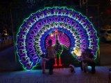 夢幻燈光節造型燈景觀燈出租/新款燈光節造型燈架合作
