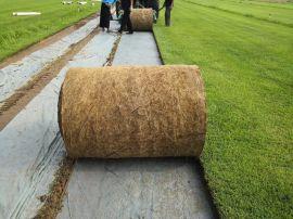 天泉二号草毯(规格1*1m)市价多少?