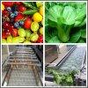 果实类清洗风干机 中药材清洗机 根茎类叶菜清洗机