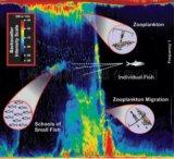 浮游生物聲學監測聲吶