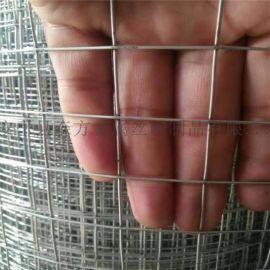 森方50丝1/2建筑工地用铁丝镀锌电焊网厂家