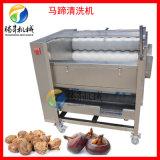 木薯剥皮机 毛刷式 马蹄清洗机