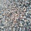 本格供應湖底用鵝卵石 水處理墊層鵝卵石濾料