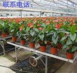 上海莆田移動式花架網熱鍍鋅網片廠家直銷