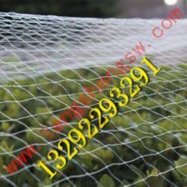 葡萄园林防鸟网/防鸟网**批发价格