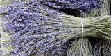 熏衣草干花束、天然香料、精油、香干花材