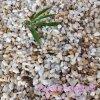 石英砂最新報價海砂 鑄造砂 圓粒海沙 石英砂濾料