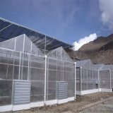 金坤陽光板溫室設計 陽光板溫室大棚建造